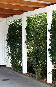 Greenery of a carport