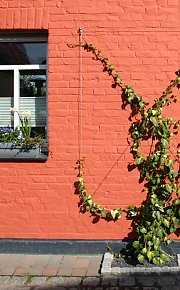 Brick facade with paint, grow system in medium kit design 'Classic' as pressure-exerting and inter lace help for Ivy