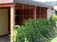 Climbing plants as privacy screens
