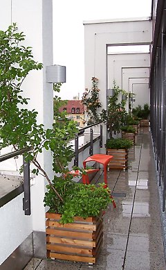 Wire rope trellis on a roof terrace