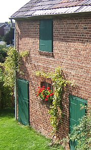 House vines with tension wire growth aid, Medium kit on an old brick house
