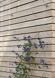 Wire trellis for wooden planking coverage