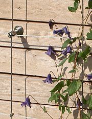 Wood battens with clematis