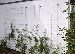 Climbing net for clematis