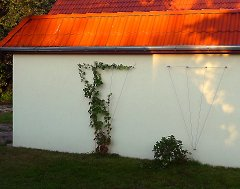 Greening a garage with climbing vines