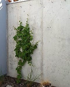 Wire rope system for Virginia Creeper