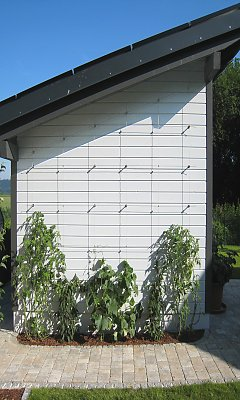 Trellis on an outbuilding