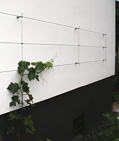 Growing elements for grapes