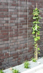 Brick facing with dutchmans pipe