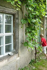 Old vicarage with grapevine