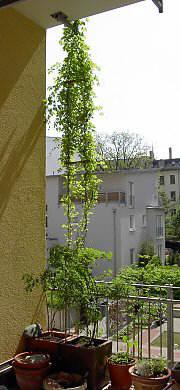 Balkonbegrunung Balkonbepflanzung Mit Balkonpflanzen