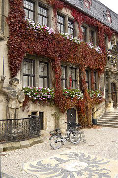 Flower boxes amidst Thicket Creeper with autumn coloring, Town hall of Quedlinburg / Saxony-Anhalt