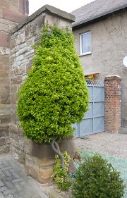 Greened natural-stone masonry, probably boxwood