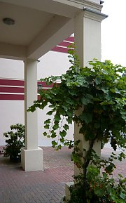 Greening a pillar with Vines