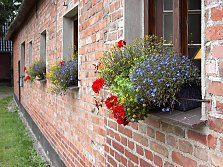 Flower (window) boxes