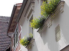 Flower boxes on windowsills
