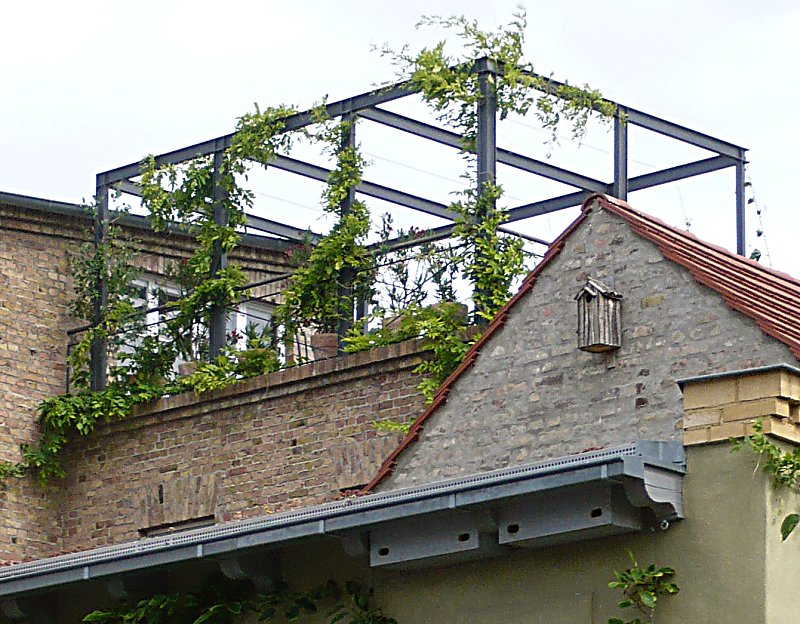 Dach Für Pergola pergola am haus selbst bauen und begrünen