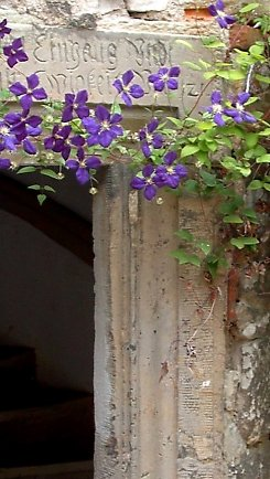 Climate protection and Clematis