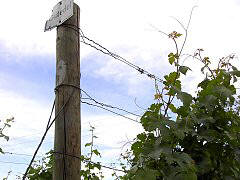 Double-wires on a espalier construction