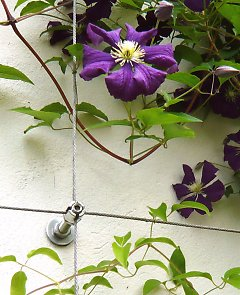 Stainless steel lattice for Clematis