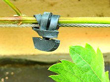 Plants that suit trellises