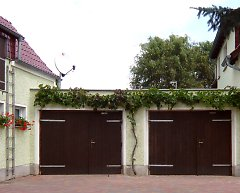 Garage greening with grapevine