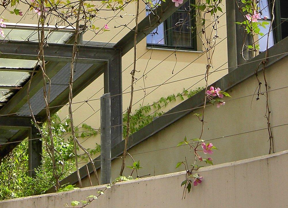 Zaunbegrünung m. Kletterpflanzen - Auswahl, Kultur und Rankhilfen