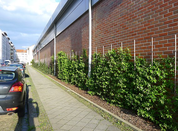 Climbing plants (Euonymus fortunei) as graffitti protection (after 2 yrs. of growth)