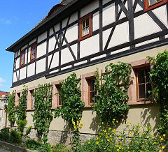 House vines on trellises in Kleinjena / Saxony-Anhalt