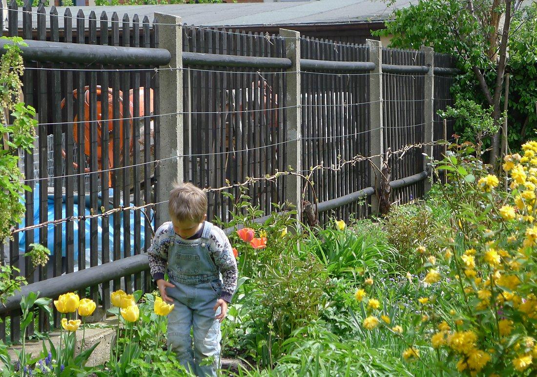 Zaunbegrünung m Kletterpflanzen Auswahl Kultur und Rankhilfen