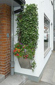 Small façade greening with ivy and various flowering plants in a planter box