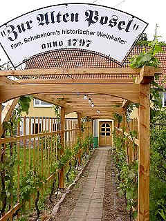 Arbour with vine
