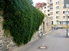 Overhanging greening of wall and roof