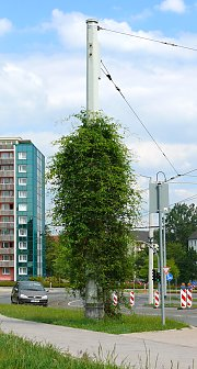 Object greening of the overhead wire mast in Plauen / Saxony