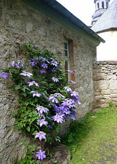 Wall mount for Clematis
