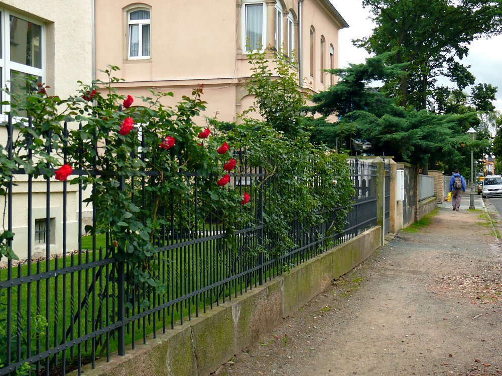 Zaunbegrünung fence greening with climbing plants selection culture and