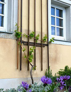 Trellis at a wall basis