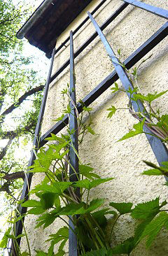 Trellis attachment