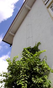 Espalier system for vine