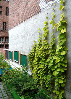 Espalier system made of stainless steel