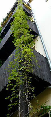 Greening of a Balcony support