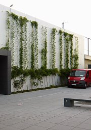 Support-wall greening