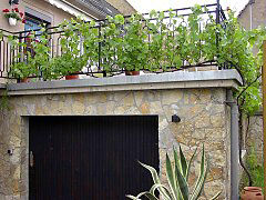 Terrace with vine