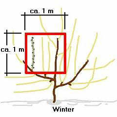 Sketch of spur-pruning