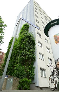 Climate protection thanks to wallgreening, Leipzig / Saxony