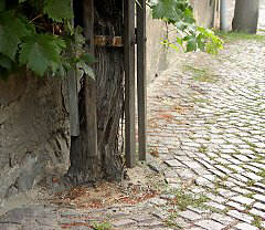 Very old house vine in Eisenberg / Thuringia