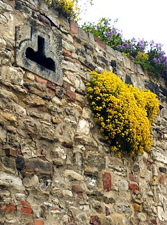 Wall greening in a wall niche