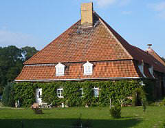 Grapevine on a Farm house in Mellenthin / Usedom / Mecklenburg-Western Pomerania