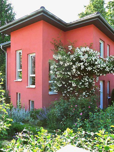 Greening up buildings with roses