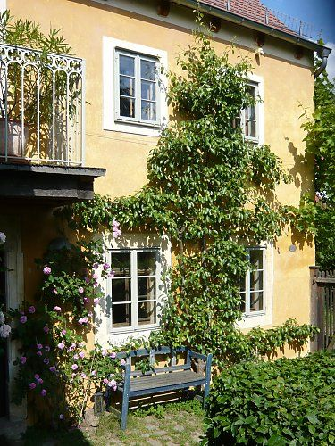Espalier pear on a protected historical building
